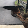 River Trail bridge collapses due to recent flooding, trail not passable