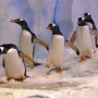 Watch them waddle: Celebrate World Penguin Day with Detroit Zoo's live cam
