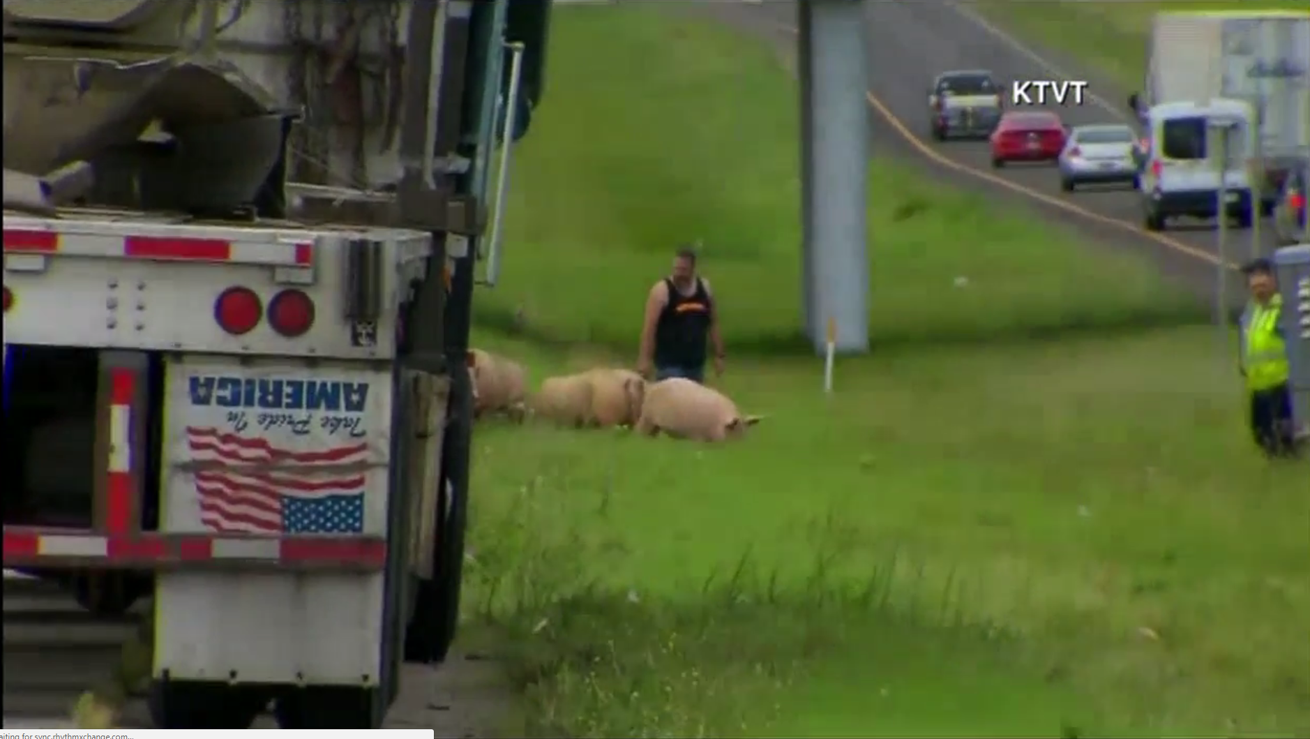 Authorities had to corral a group of pigs that found themselves dumped on Interstate 45 in Wilmer, Texas (near Dallas) after an 18-wheeler carrying the livestock overturned.  (KTVT via Newsource)