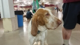 UKC Premier Dog Show invades Kalamazoo County Expo Center
