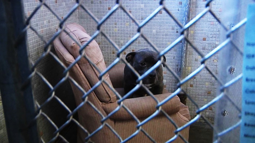 Illinois Local Animal Shelter Dogs Get Arm Chairs Kokh