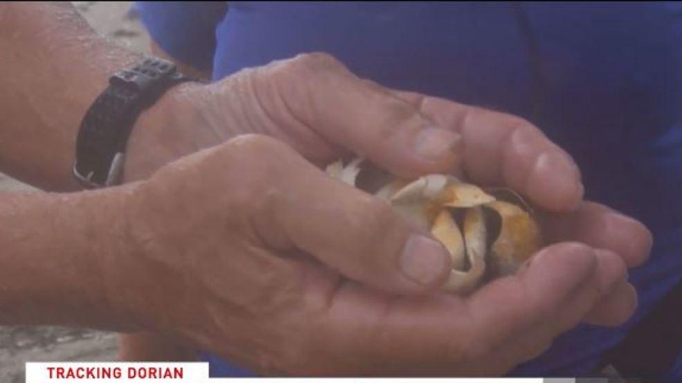 Broken sea turtle eggs found along Florida beach as Dorian