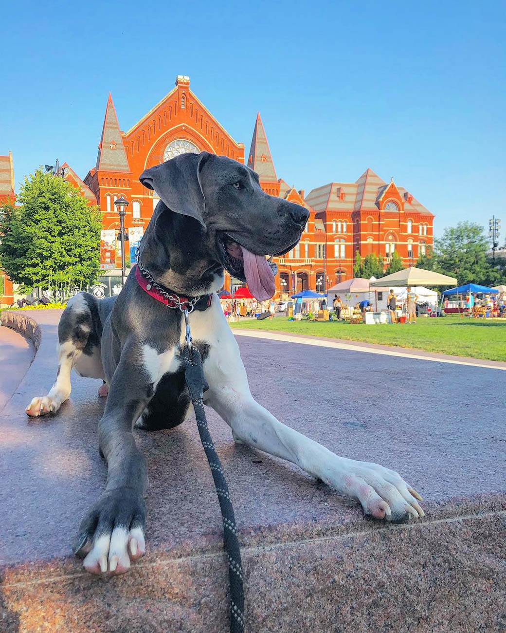 Ove is a Great Dane who loves visiting Washington Park, among other Cincinnati landmarks. / Image courtesy of Instagram user @a.dane.called.ove // Published: 11.28.18