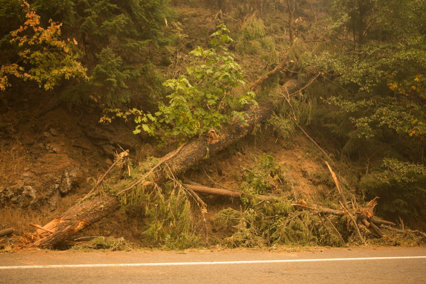 Trees and debris on Highway 138 East on the Umpqua North Complex in the Umpqua National Forest on Friday, Sept. 1, 2017. (Kari Greer/U.S. Forest Service)