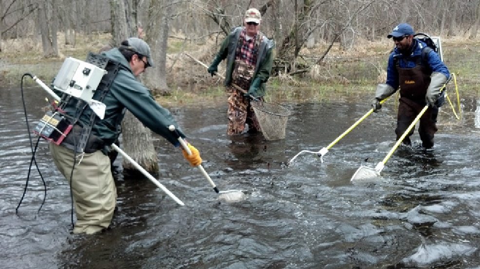 A crew nets northern pike stranded April 21, 2014, after spawning in wetlands in Suamico.