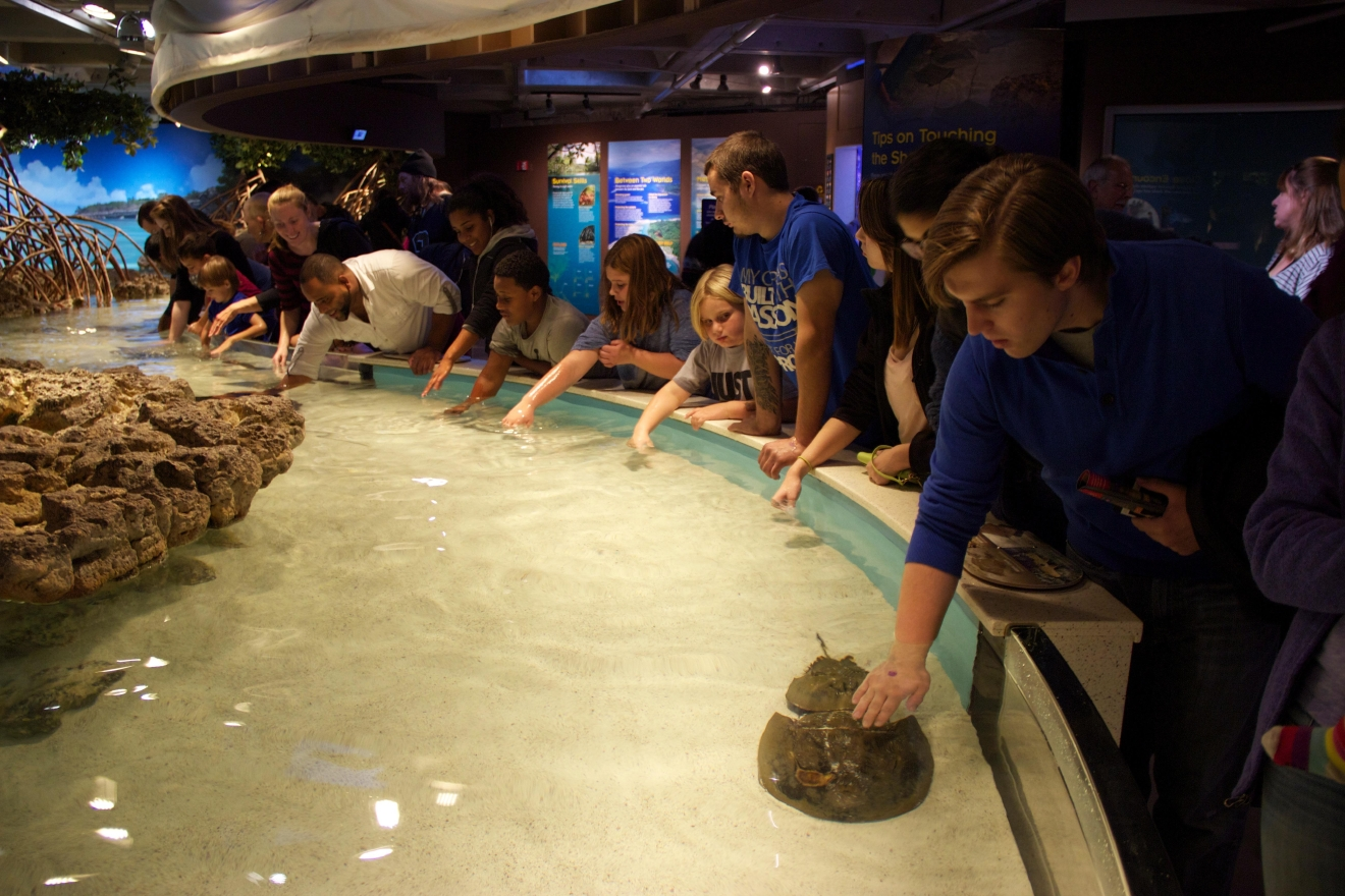The giant exhibit is so big that the tank had to be built first, and the rest of the aquarium was built around it. (Image: Lani Furbank)
