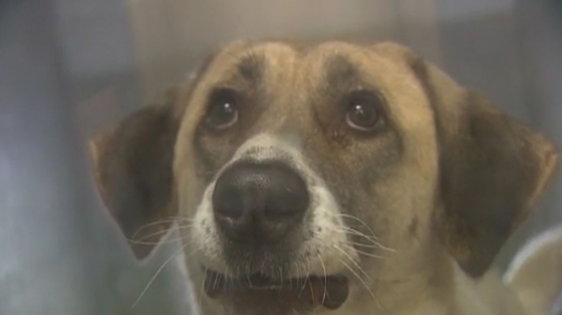 Abandoned dog walks 20 miles twice to get back to family. (KOCO via CNN Newsource)