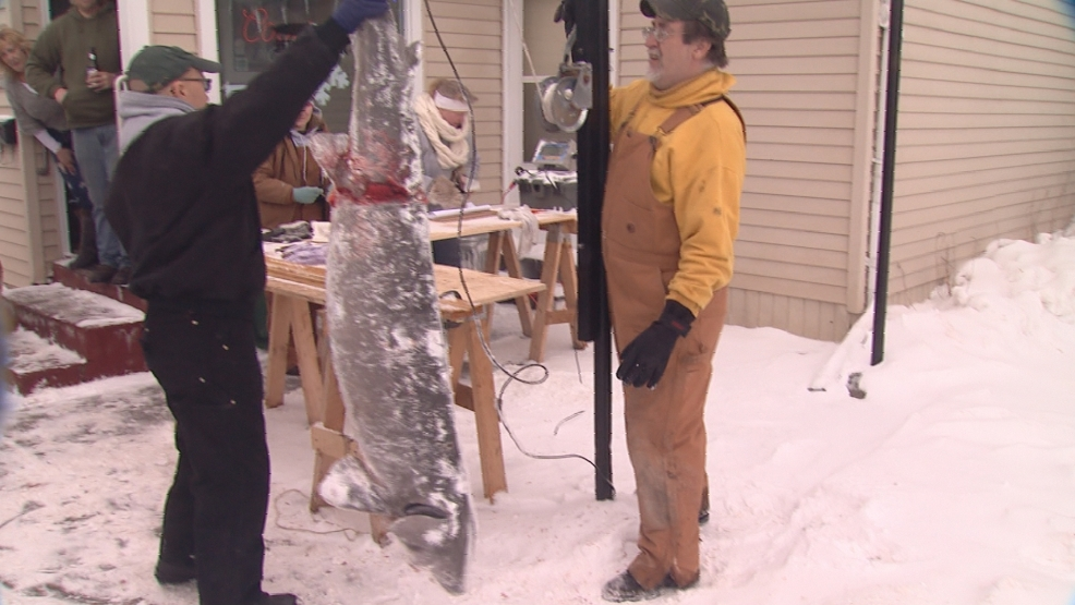 This 137.2 pound sturgeon speared by Sheri Rasmussen of Oshkosh was the largest of the final day.