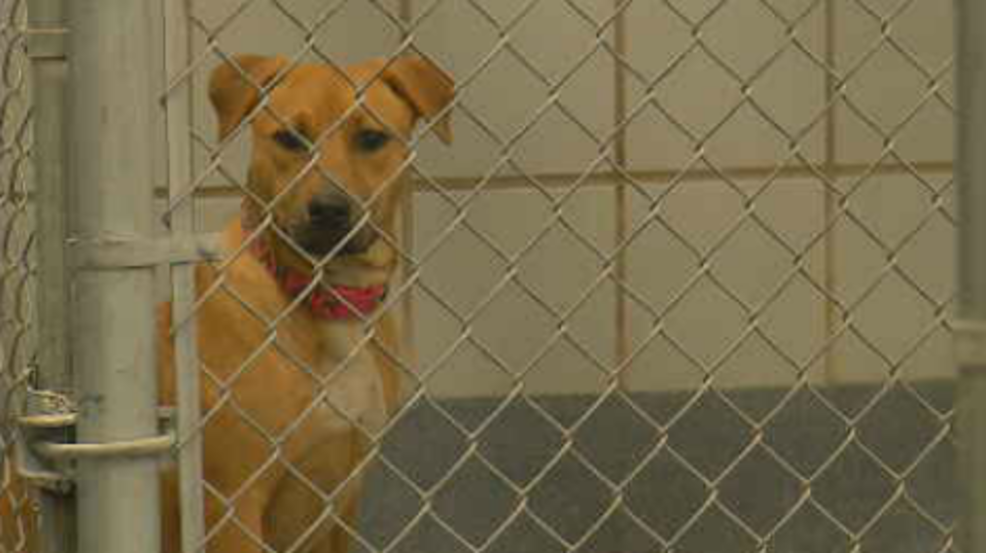 Why the sale of puppies and kittens at San Antonio pet
