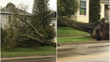 GALLERY: Storm Damage