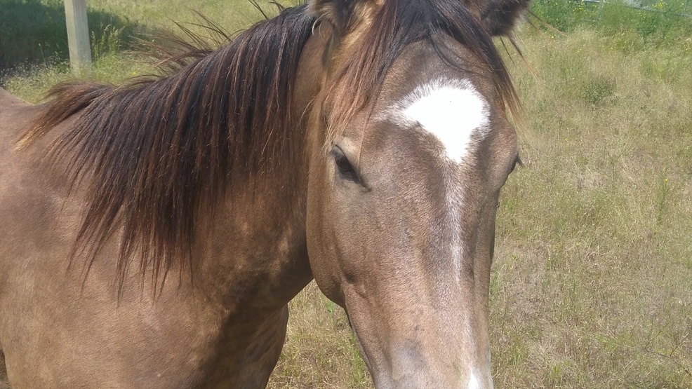 Horse found, deputies looking for owner