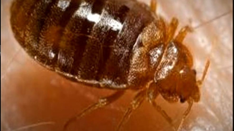 tracking bed bugs in tulsa: ktul investigates | ktul