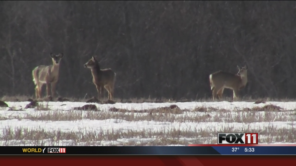 Proposal would limit feeding and baiting deer