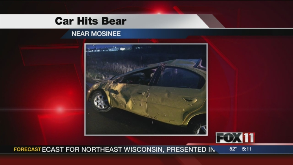 Driver hurt after hitting bear