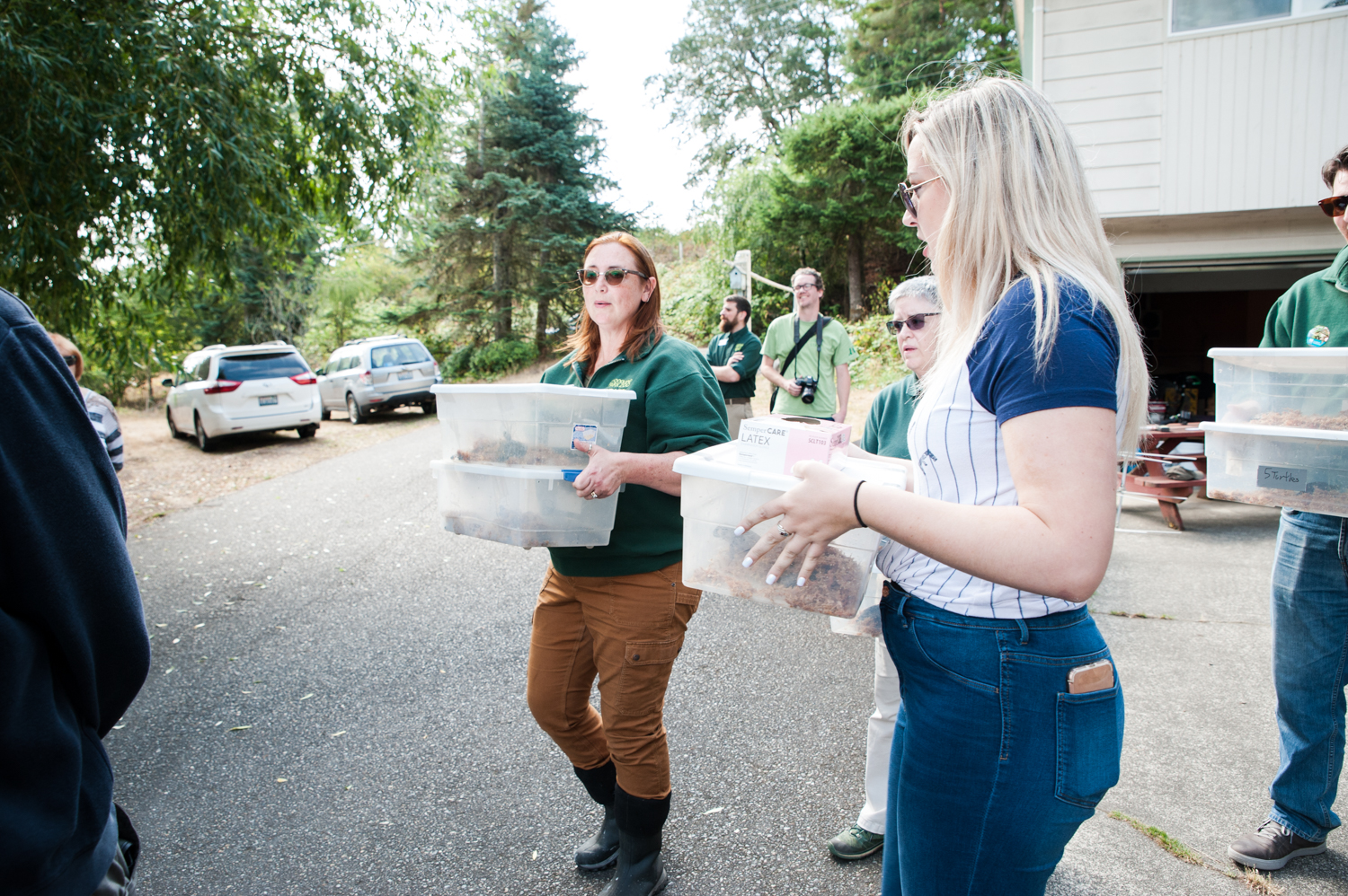 Woodland Park Zoo and Washington Department of Fish and Wildlife will released about 40 juvenile western pond turtles, an endangered species, to a protected recovery site Aug. 9, as part of the{ }Western Pond Turtle Recovery Project, Washington state's longest-running species reintroduction project. Under the recovery project, the turtles were collected from the wild as eggs and are given a head start on life under the care of Woodland Park Zoo; the head start improves their chance of survival in the wild.{ }Recovery efforts over the last 28 years have resulted in more than 2,300 turtles being head started, and surveys indicate that more than 1,000 of the released turtles have survived and continue to thrive at six sites.{ } (Image: Elizabeth Crook / Seattle Refined)