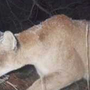 Teenager kills mountain lion while hunting in western Iowa