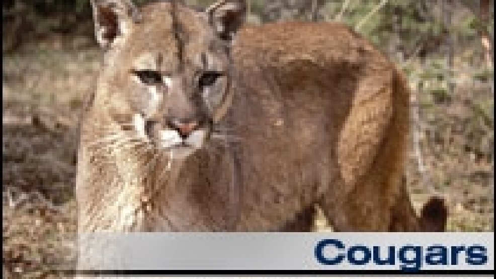 Orphaned Cougars Find A Home At The Oregon Zoo