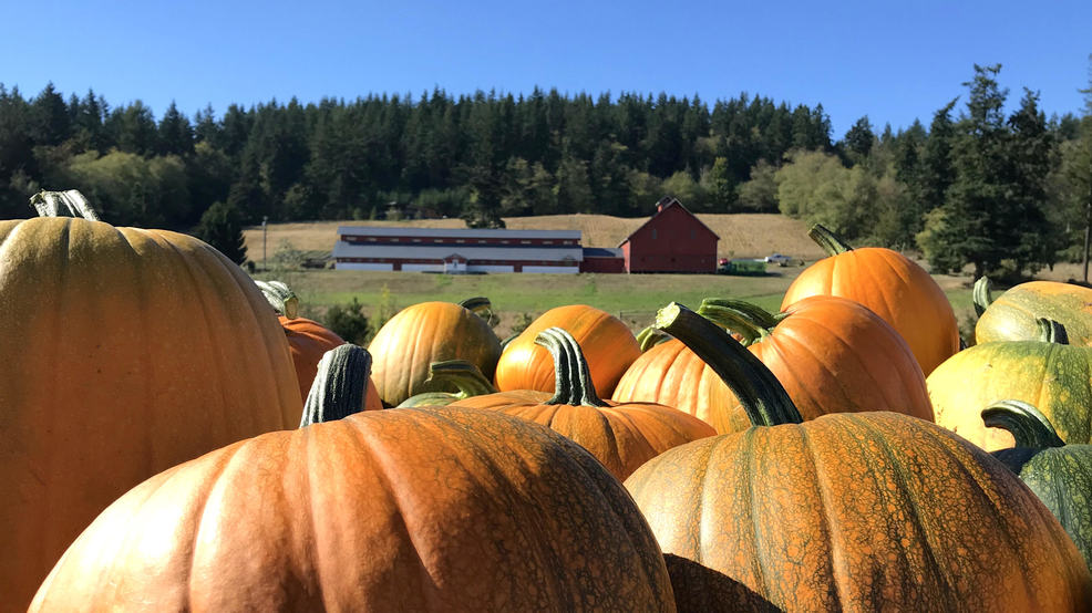 Camano Pumpkin Project 2.jpg