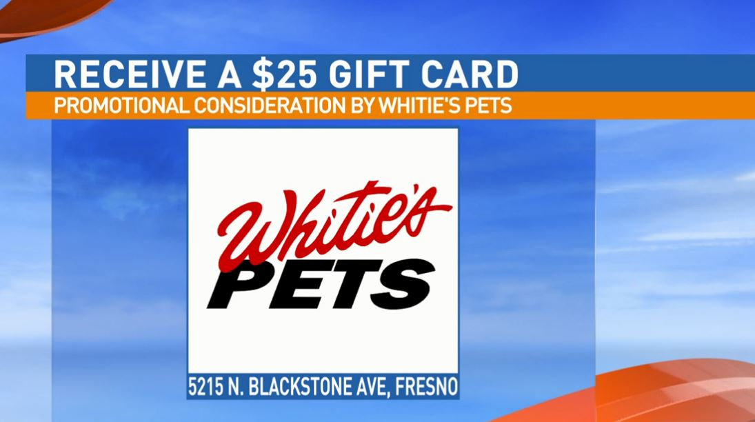 Get a $25 gift certificate to Whitie's Pets for adopting Ingrid