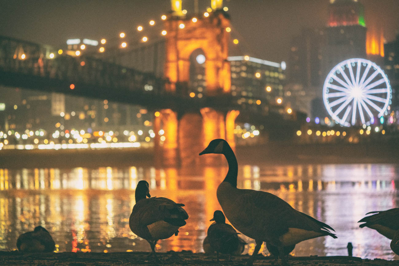 """Cincy has plenty of night life, especially of the feathered variety."" Even birds want to sit back and take in the scenic view sometimes."" / Image courtesy of Instagram user @jonreynoldsphoto // Published: 3.20.19"
