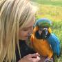 Milo the gold macaw returns home to the Columbus Zoo