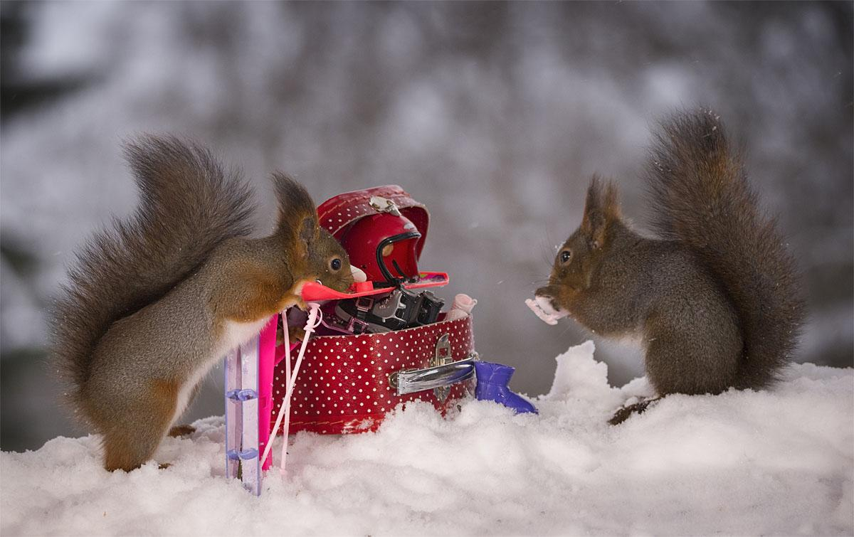 Photos Squirrels Get Ready For The Big Winter Games Komo